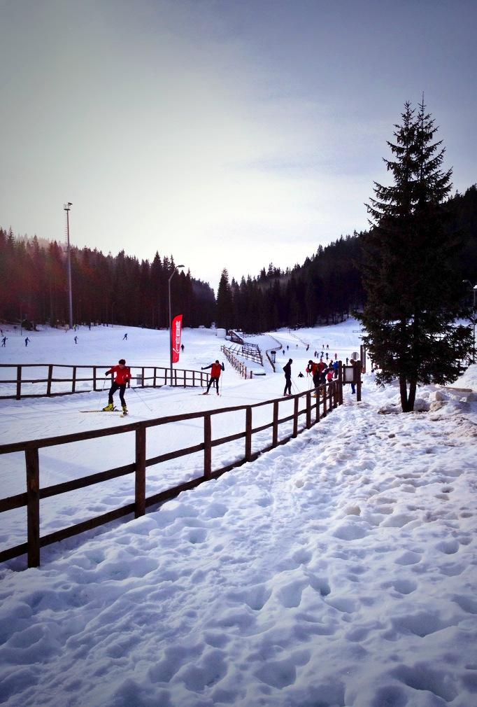 pokljuka, skiing, biathlon