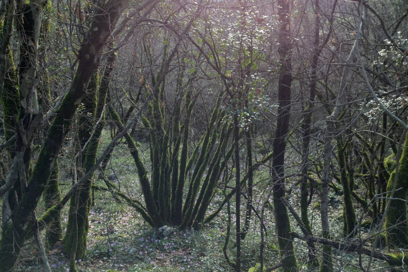 Toward the end of the trail, there was an ethereal look with the lighting and nature.