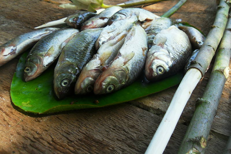 Fish for dinner in the Montengro bushcraft experience