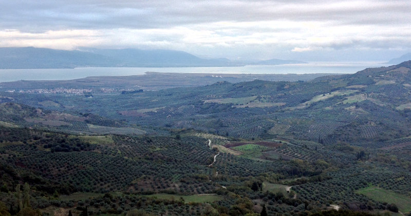 Olive trees & countryside in Greece on this bike touring Mediterranean Route