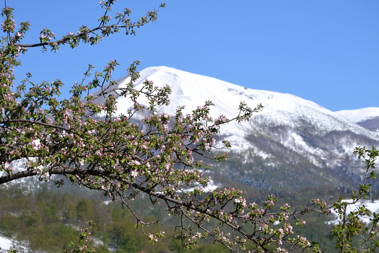 Vukadinovic organic orchard near Mojkovac, Montenegro
