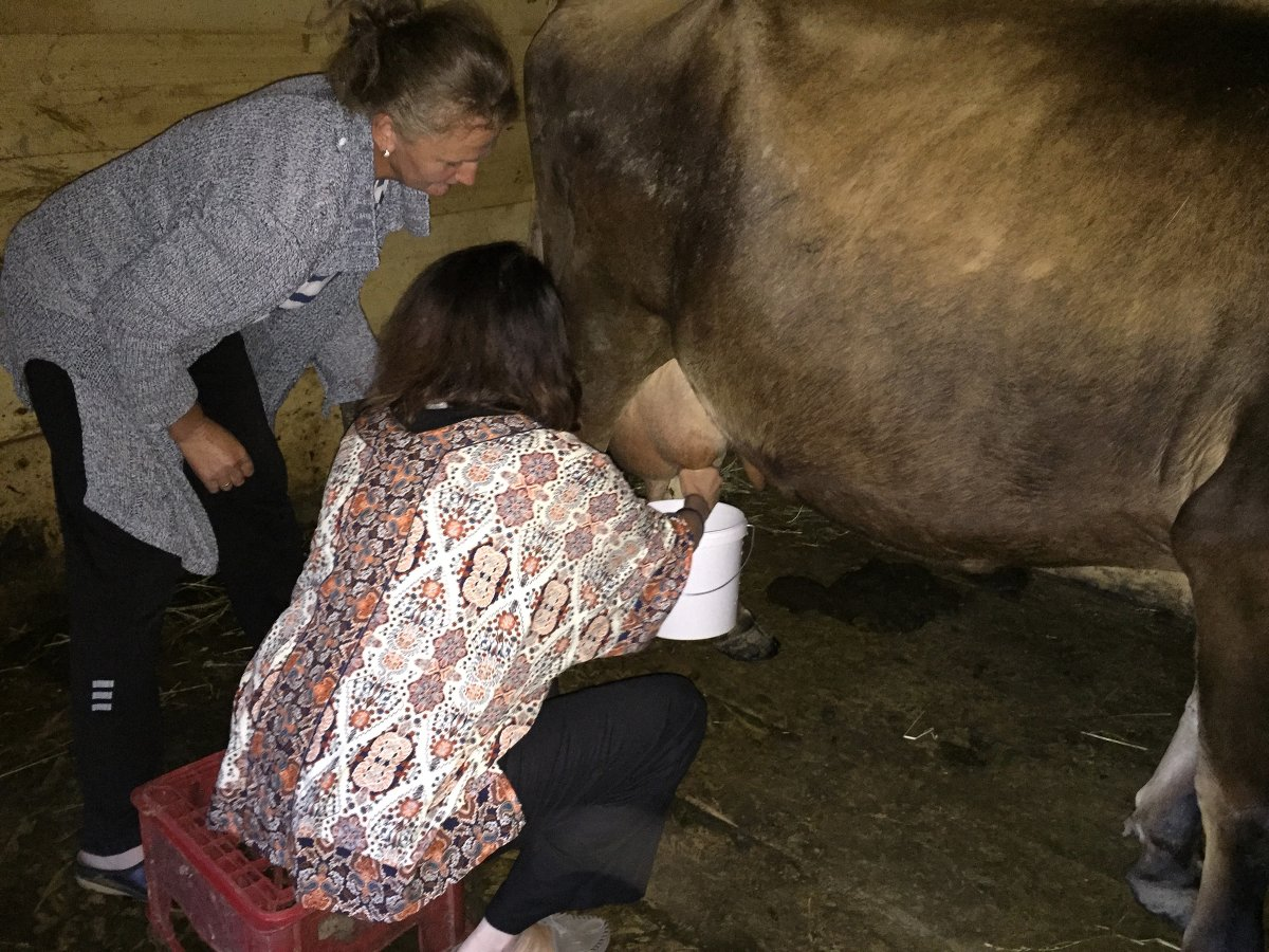 City girl learning to milk a cow