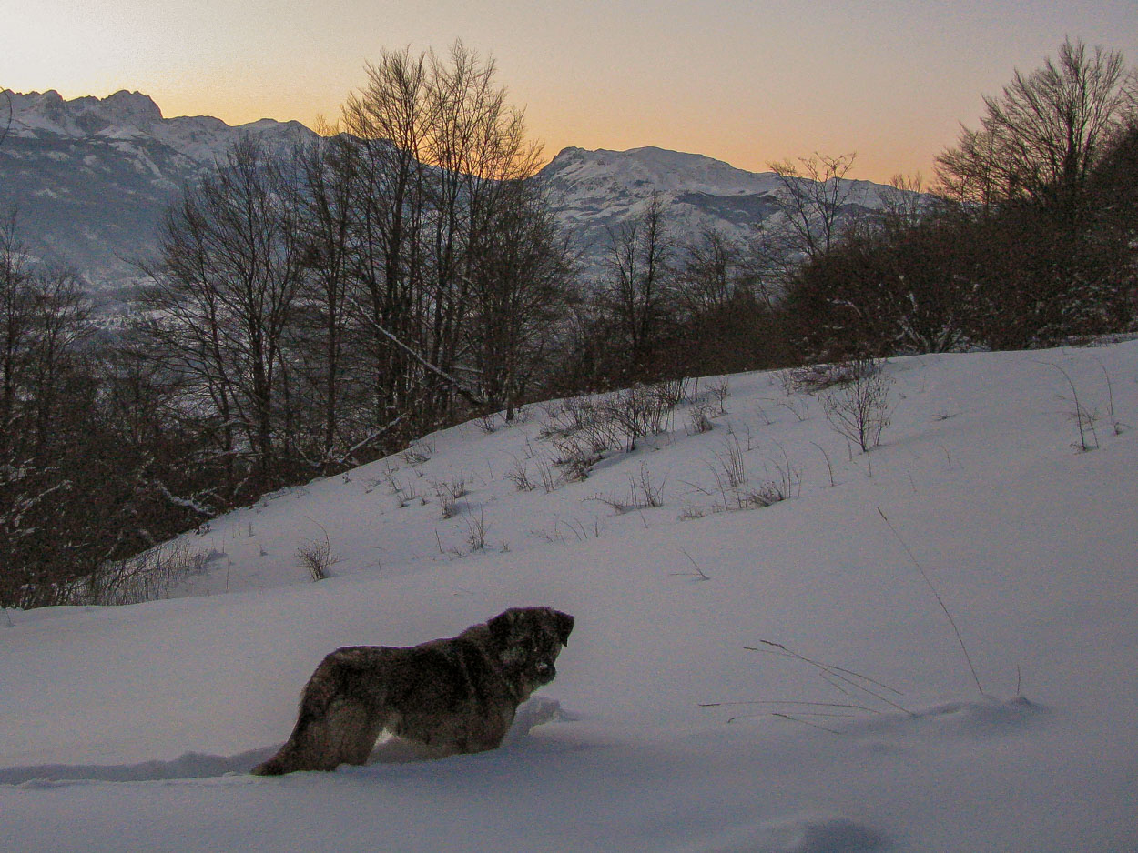 Friendly dog encountered on cross country ski route in MNE