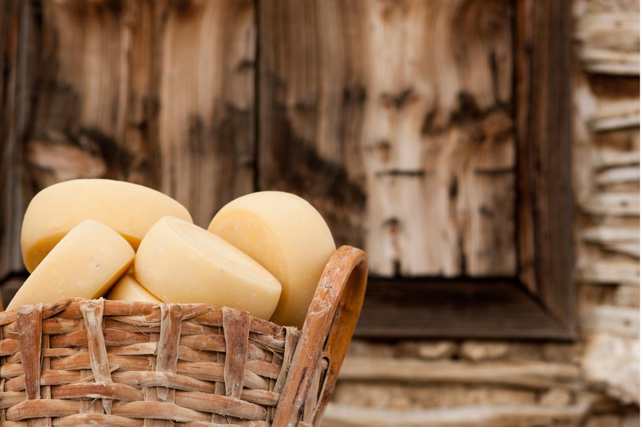 Organic cheese in Meanderbug farm stay network