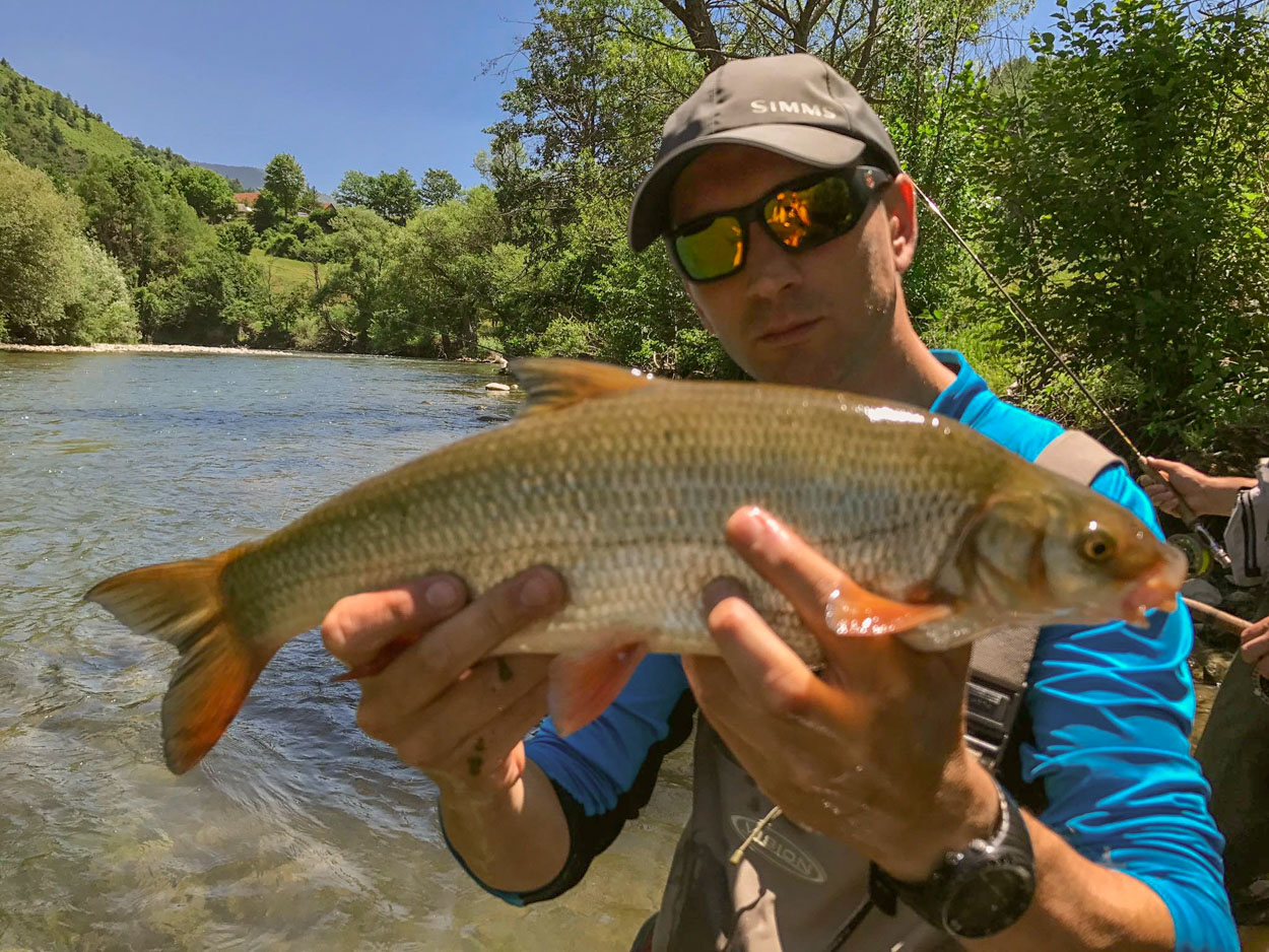 Catching a nase while fly fishing Montenegro