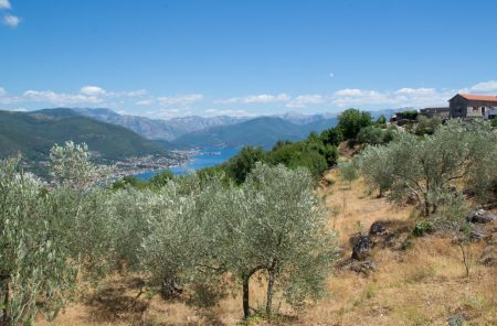 View of Boka Bay from Lustica farm stay, Montenegro