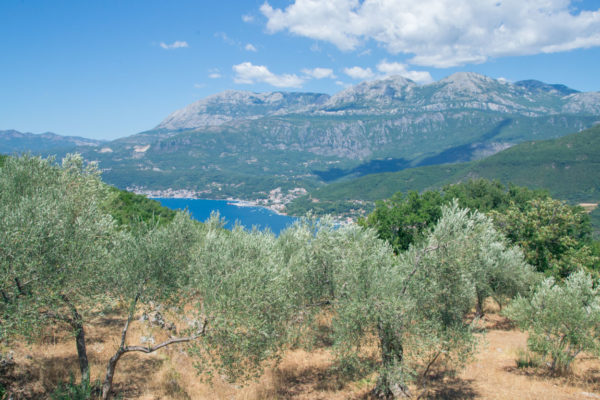 Old Mill Farm stay situated above the Bay of Kotor