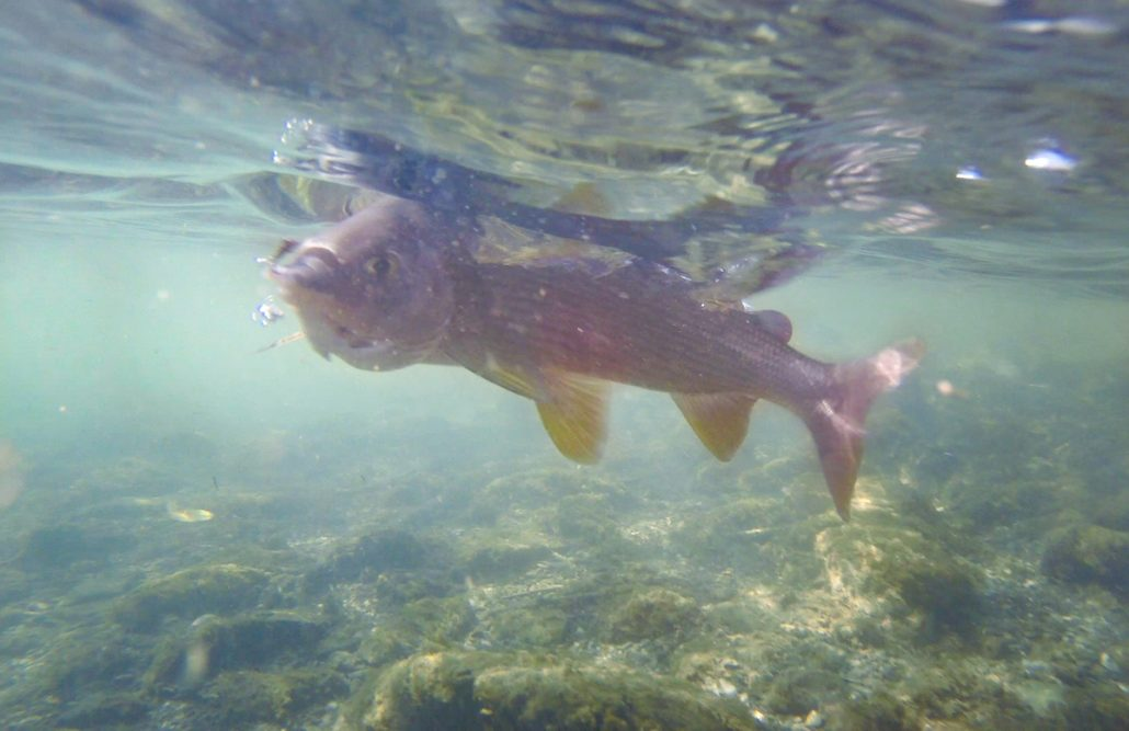 complete guide to fly fishing in Montenegro
