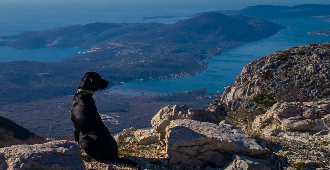 An adventure dog admires the view during a road trip on the serpentine road