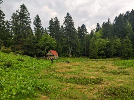 Cute little cabin in the woods