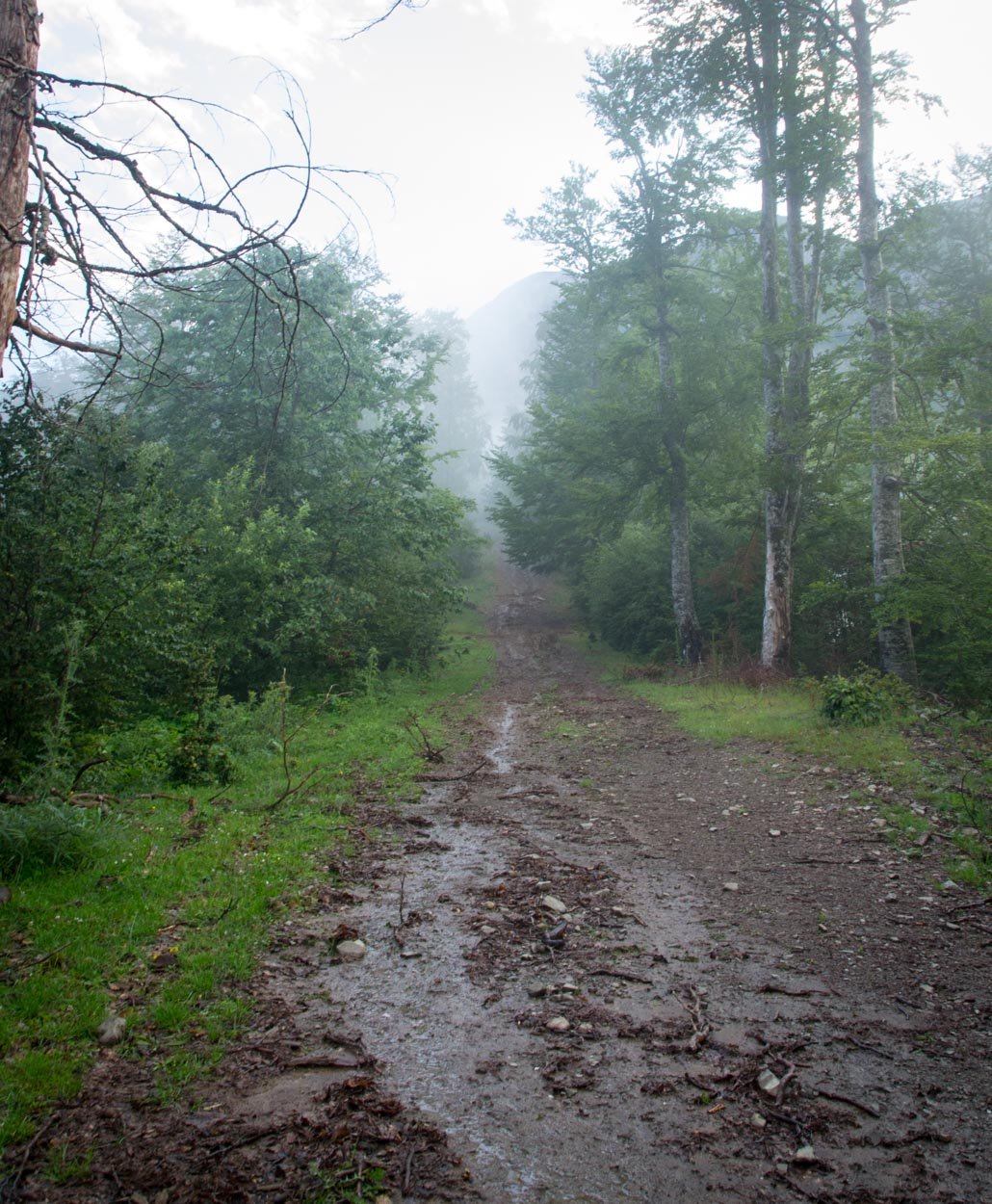 Soaked singletrack trail at Komovi in Northern Montenegro