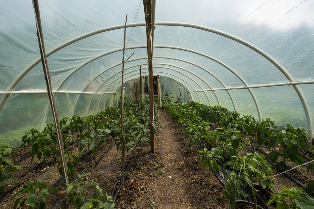 Greenhouse at the Bulatovic Farm stay