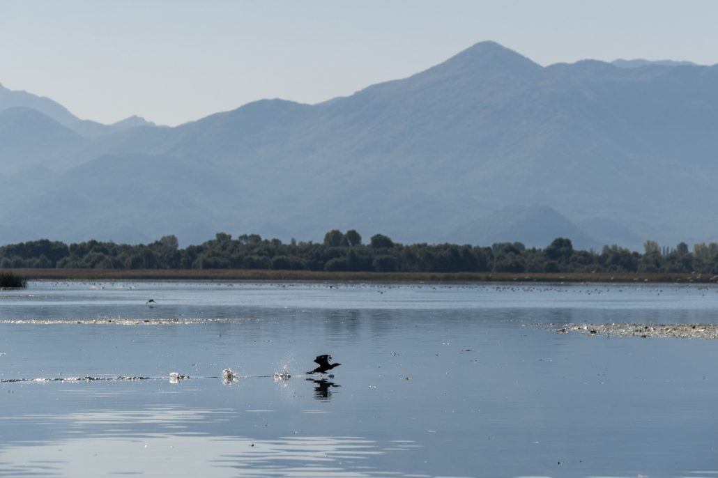 Birdwatching wetland with mountain backdrop