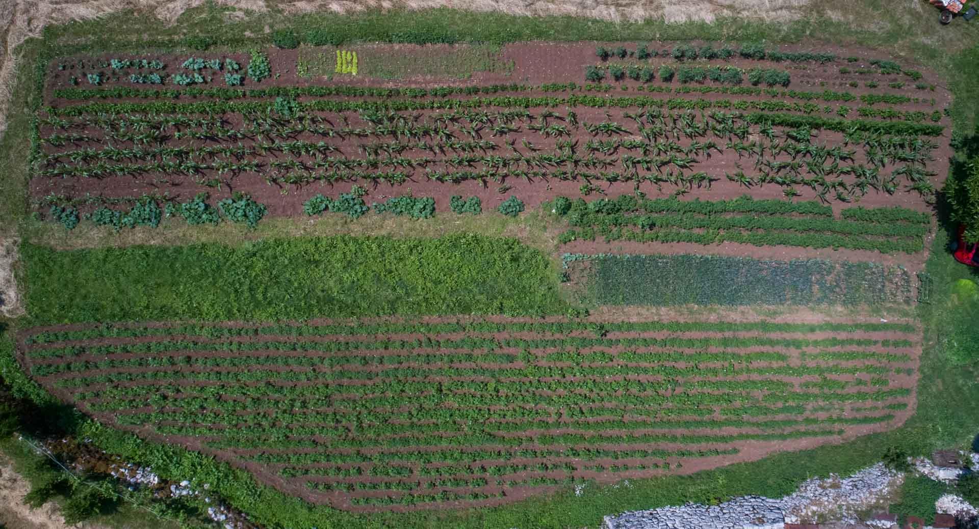 Aerial view of organic garden in Montenegro